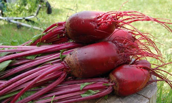 Zdraví prospěšné účinky červené řepy